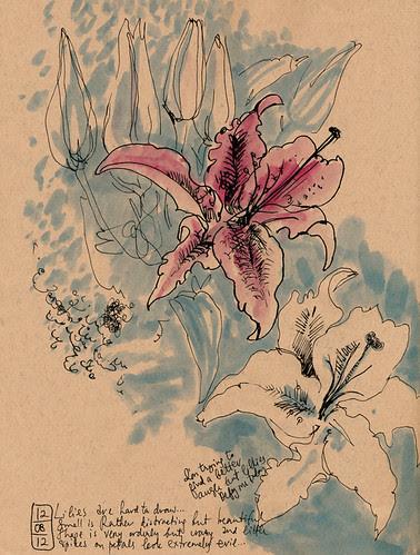 December 2012: Daily Flowers
