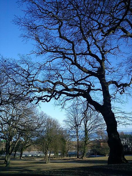 File:Oak Tree Silhouette.JPG