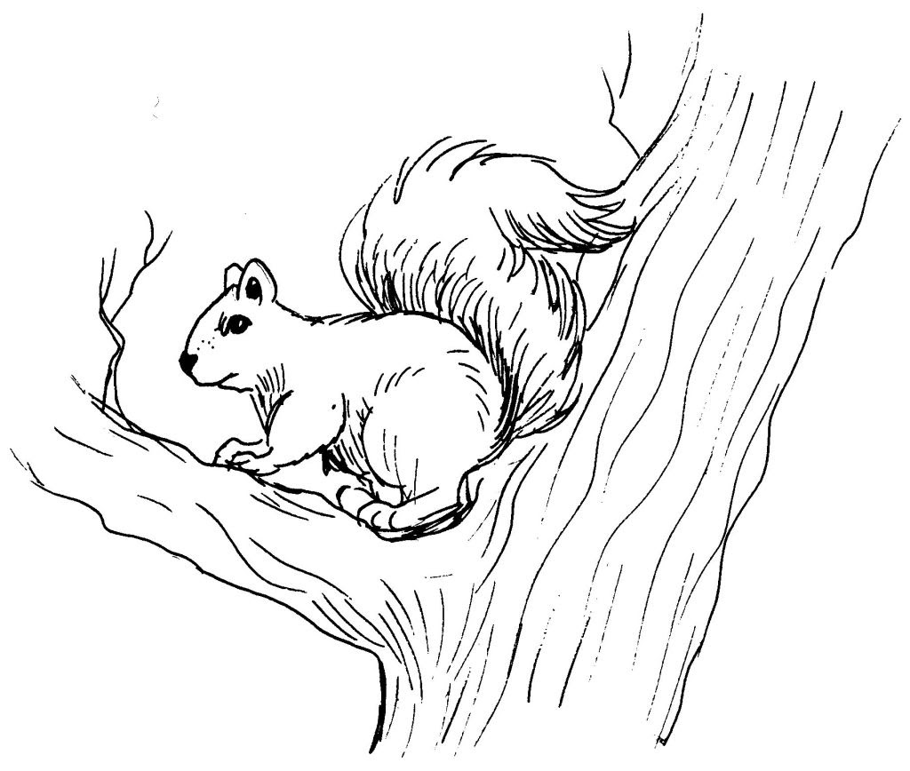 Coloriage  imprimer Animaux Ecureuil numéro