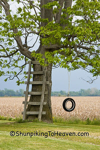 Tire Swing and Tree Ladder, Clay County, Indiana