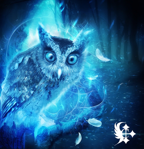 Everything Under the Moon • Magical Owl by Celairen -