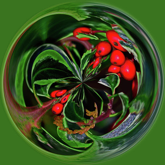 Very Berry Jolly Holly Christmas Sphere by Tikvah's Hope