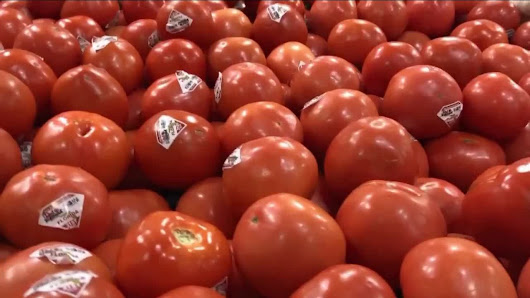 Florida tomato shortage blamed on Hurricane Irma
