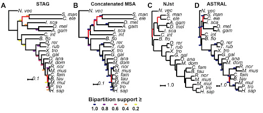 STAG: Species Tree Inference from All Genes - biorxiv | The science toolbox
