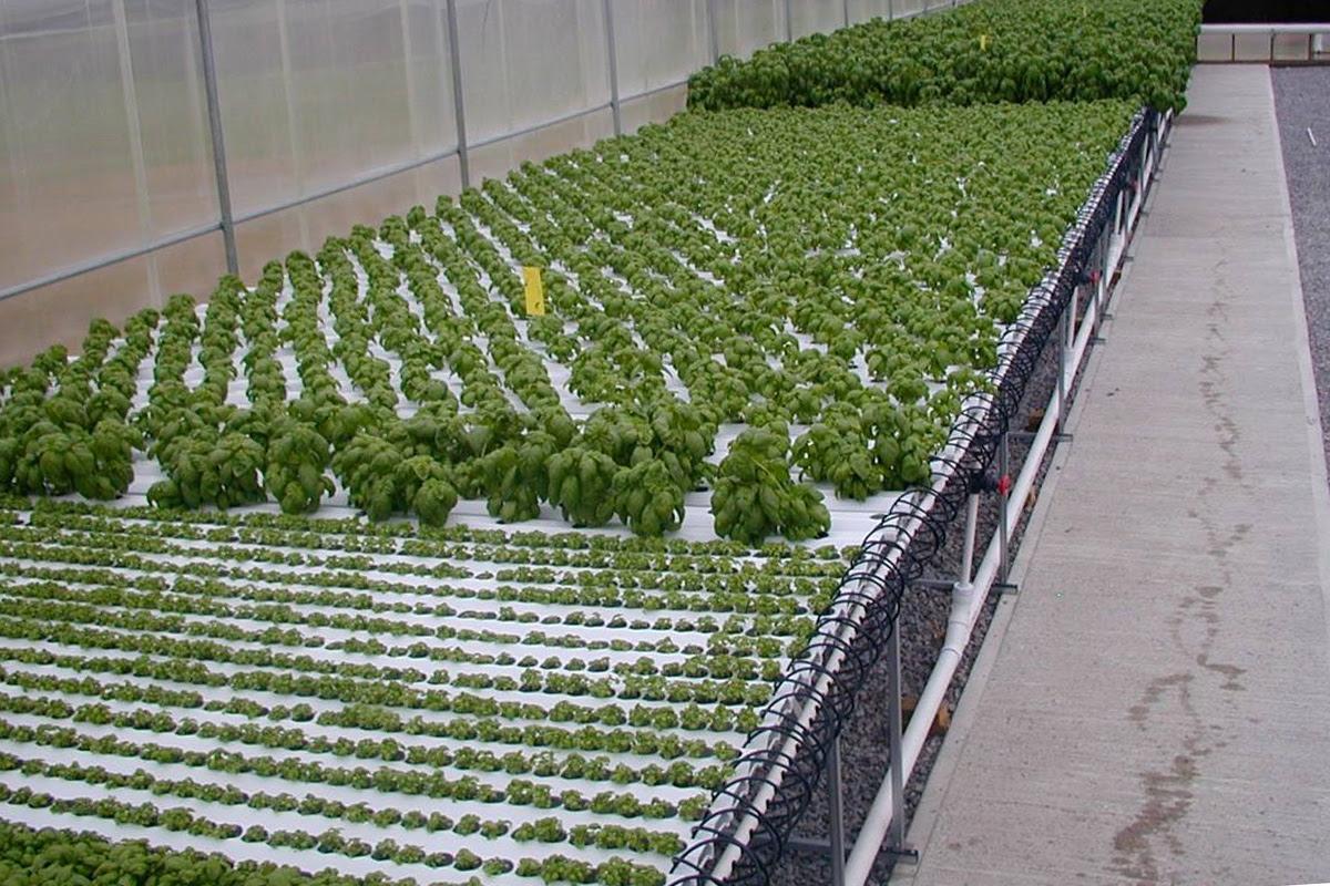 nft hydroponics systems ~ Make Aquaponics