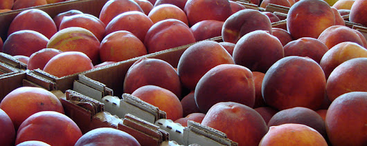 The Best Fruit & Ice Cream - Ham Orchards | Fresh Peaches | Since 1979