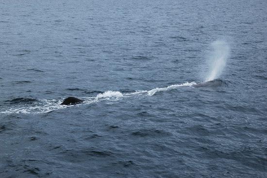 20110919-DSC_2618blowing-whale