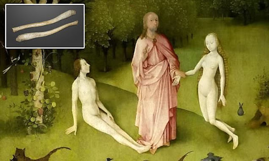 God made Eve from Adam's PENIS and not his rib, claims academic