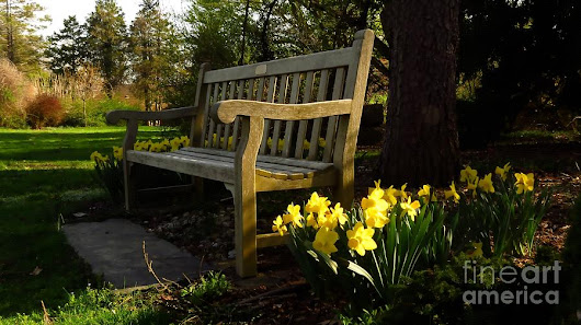 Sit Among The Daffodils by Bonnie J Thompson