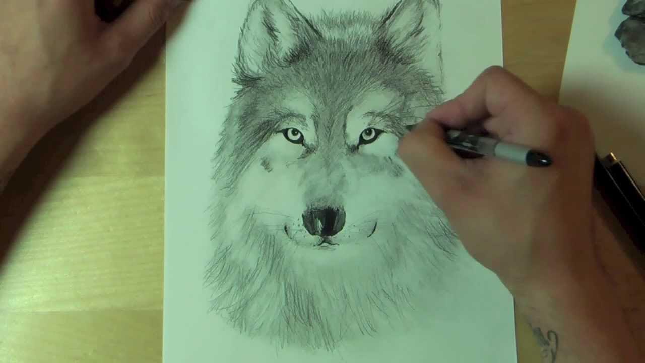 Wie zeichnet man einen WOLF ?! How to draw - YouTube