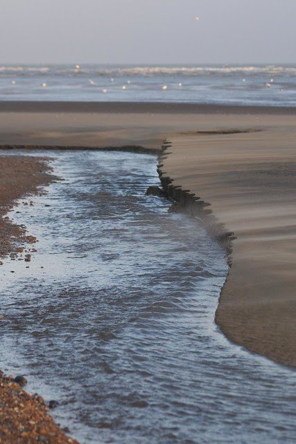 DSC_6510 Rye Harbour beach