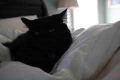 Huggy Bear in bed