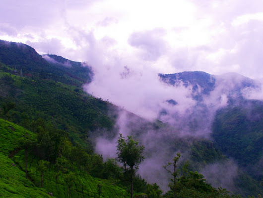 The Tea Gardens Of Coonoor In The Nilgiris - Nativeplanet