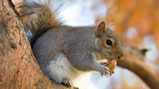 'They're incredibly smart': Keeping a squirrel out of your yard no easy feat, says Winnipeg prof