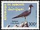 White-eyed Gull Ichthyaetus leucophthalmus