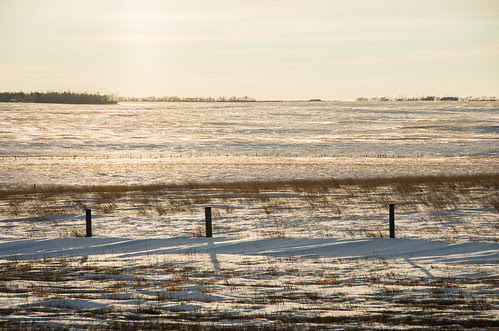 prairies in winter