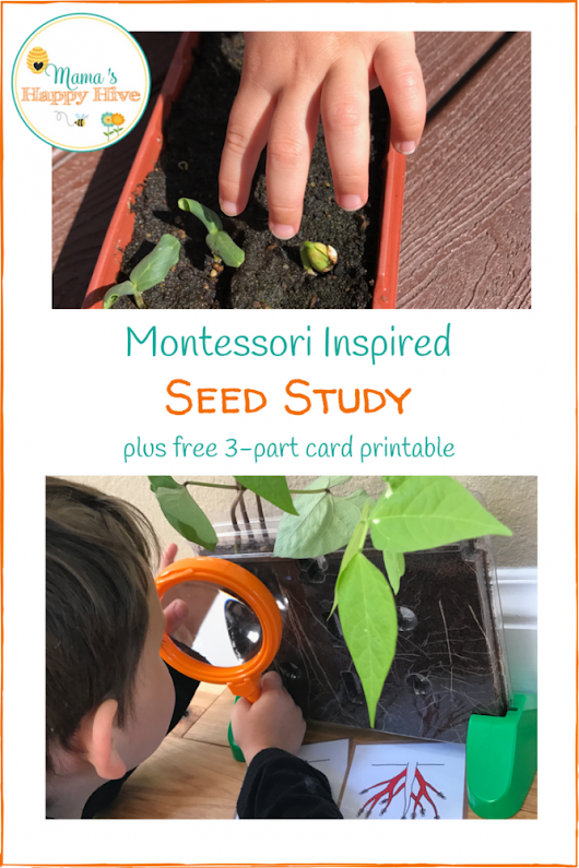 Montessori Inspired Seed Study for Preschool Science