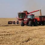 L'info marché du jour La moisson serait pléthorique partout dans le monde, en blé, maïs et colza
