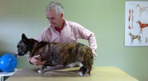 exercícios para cães de apartamento
