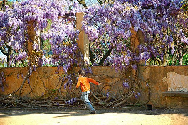Running Kid at Parc del Laberint d'Horta, Barcelona [enlarge]