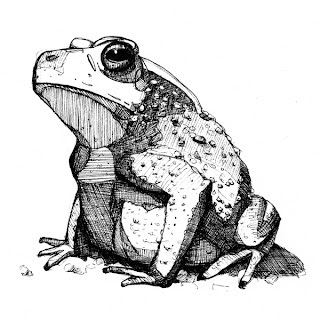 Musings of a Wandering Artist: A Knot of Toads,