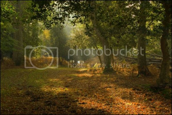 new-forest-1