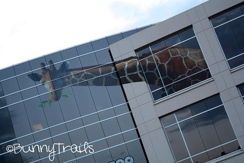 window giraffe 2