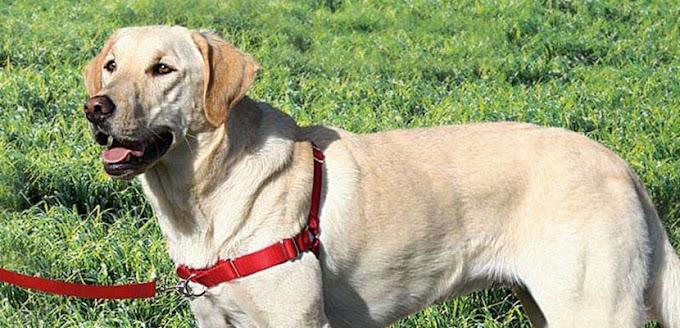 Arnés anti-tirones para pasear al perro