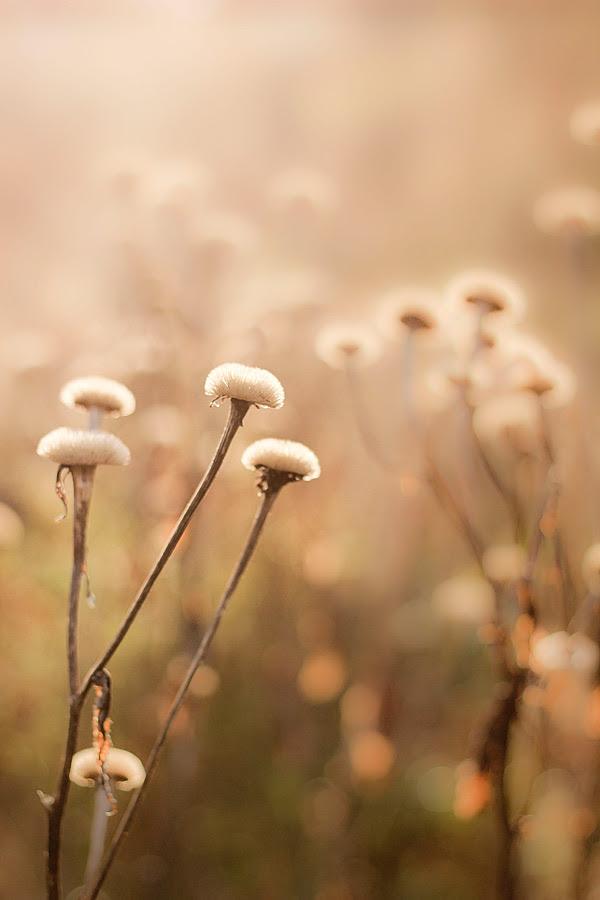 Blommor-i-höstljus-1