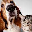 10 Tips for Bringing Cats and Dogs Together