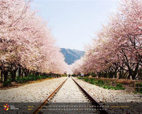 official site  korea tourism org wallpaper