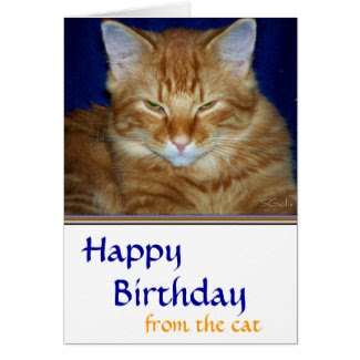 Grumpy Tabby Cat Birthday Card Card