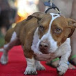 Upset at World's Ugliest Dog contest