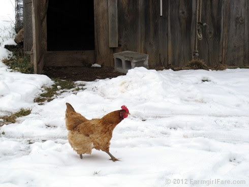 Lulabelle in the snow - FarmgirlFare.com