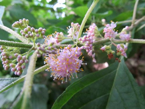 hotweatherflowers5