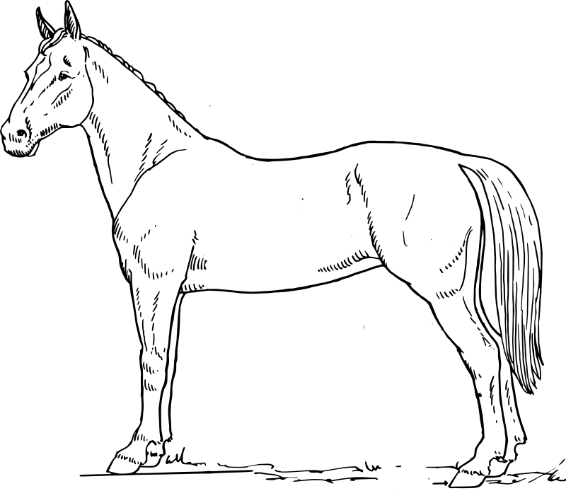 50 Top Horse Alphabet Coloring Pages  Images