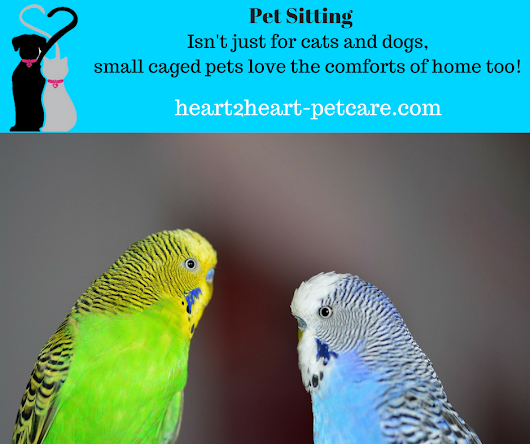 West Seattle Pet Sitting isn't just for Cats and Dogs - Heart 2 Heart Pet Care