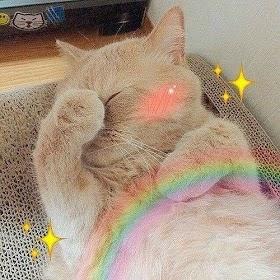 Kucing Lucu Foto Ccp Kucing