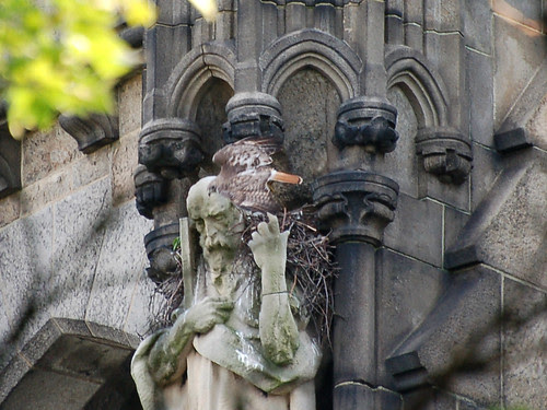 Tristan Exits the Nest
