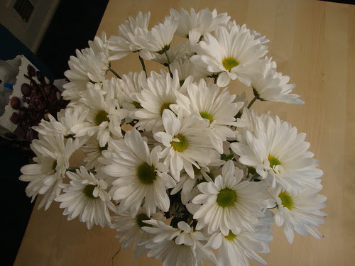 daisy mums from my mom