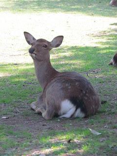 Deer at Nara near station