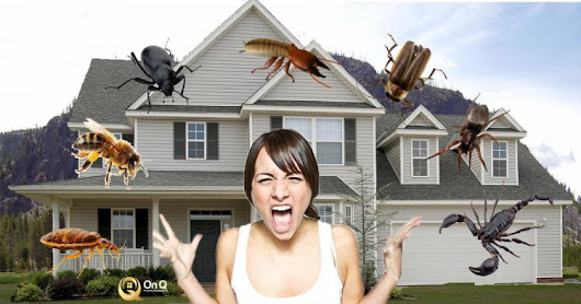 Signs your Property may be Infested with Bugs and in need of Pest Control! - On Q Property Management