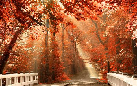 fall desktop wallpapers backgrounds  images