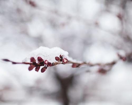 snowybranch2 copy