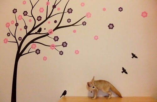Mummy. . . There's a tree on the wall. . .