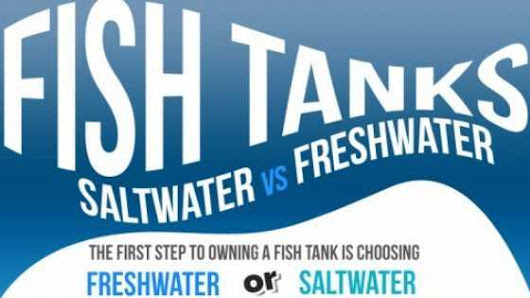 3 Big Differences Between Saltwater vs Freshwater Aquariums - TFCG