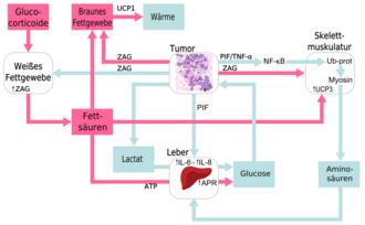 Gewichtsverlust Bei Tumor