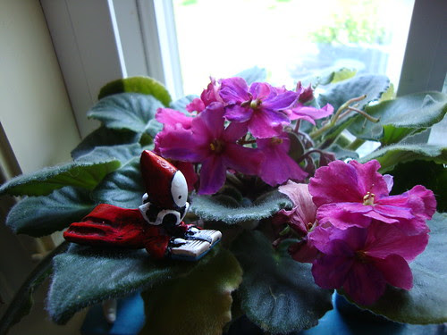 reading poppet in violet