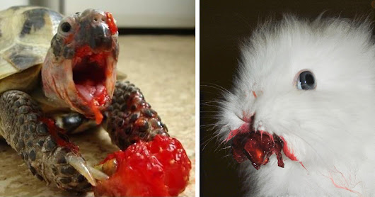 12+ Animals Eating Berries Look Like Horror Movie Monsters