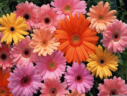 The Best Flowers for Summer!